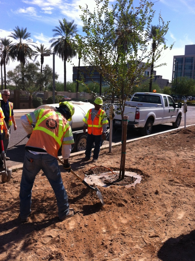 The last tree to be planted as part of the 5th Street streetscape project of the City of Phoenix, Phoenix Biomedical Campus, University of Arizona College of Medicine, Dignity Health, Evans Churchill Community Association, and Roosevelt Row CDC.